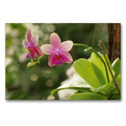 Premium Textil-Leinwand 90 x 60 cm Quer-Format Orchidee rosé | Wandbild, HD-Bild auf Keilrahmen, Fertigbild auf hochwertigem Vlies, Leinwanddruck von Bianca Schumann
