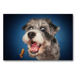 Premium Textil-Leinwand 90 x 60 cm Quer-Format Parson Russell Mix | Wandbild, HD-Bild auf Keilrahmen, Fertigbild auf hochwertigem Vlies, Leinwanddruck von Jürgen Schöberl