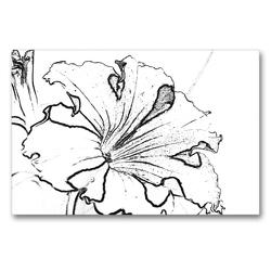 Premium Textil-Leinwand 90 x 60 cm Quer-Format Petunie in Schwarz Weiß. | Wandbild, HD-Bild auf Keilrahmen, Fertigbild auf hochwertigem Vlies, Leinwanddruck von Marlise Gaudig