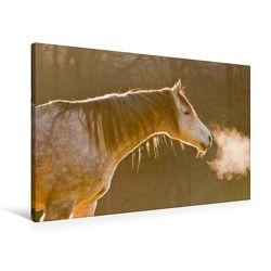 Premium Textil-Leinwand 90 x 60 cm Quer-Format Pferde sind Frischluftfanatiker   Wandbild, HD-Bild auf Keilrahmen, Fertigbild auf hochwertigem Vlies, Leinwanddruck von Meike Bölts von Bölts,  Meike