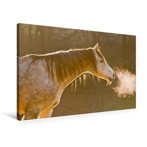 Premium Textil-Leinwand 90 x 60 cm Quer-Format Pferde sind Frischluftfanatiker | Wandbild, HD-Bild auf Keilrahmen, Fertigbild auf hochwertigem Vlies, Leinwanddruck von Meike Bölts von Bölts,  Meike