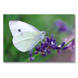 Premium Textil-Leinwand 90 x 60 cm Quer-Format Schmetterling auf Nektarsuche   Wandbild, HD-Bild auf Keilrahmen, Fertigbild auf hochwertigem Vlies, Leinwanddruck von Tanja Riedel