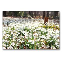 Premium Textil-Leinwand 90 x 60 cm Quer-Format Schneeglöckchen im Sonnenlicht | Wandbild, HD-Bild auf Keilrahmen, Fertigbild auf hochwertigem Vlies, Leinwanddruck von Gisela Kruse