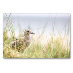 Premium Textil-Leinwand 90 x 60 cm Quer-Format Silbermöwenbaby | Wandbild, HD-Bild auf Keilrahmen, Fertigbild auf hochwertigem Vlies, Leinwanddruck von N N
