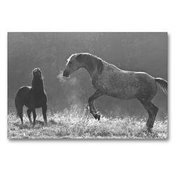 Premium Textil-Leinwand 90 x 60 cm Quer-Format Spiel im Morgenlicht | Wandbild, HD-Bild auf Keilrahmen, Fertigbild auf hochwertigem Vlies, Leinwanddruck von Meike Bölts