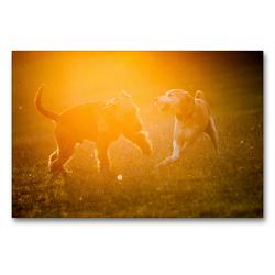 Premium Textil-Leinwand 90 x 60 cm Quer-Format Spielende Hunde im Sonnenuntergang | Wandbild, HD-Bild auf Keilrahmen, Fertigbild auf hochwertigem Vlies, Leinwanddruck von Meike Bölts