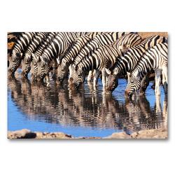 Premium Textil-Leinwand 90 x 60 cm Quer-Format Trinkende Zebras im südlichen Afrika | Wandbild, HD-Bild auf Keilrahmen, Fertigbild auf hochwertigem Vlies, Leinwanddruck von Birgit Scharnhorst