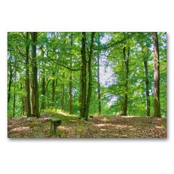 Premium Textil-Leinwand 90 x 60 cm Quer-Format Unterwegs im Wald | Wandbild, HD-Bild auf Keilrahmen, Fertigbild auf hochwertigem Vlies, Leinwanddruck von Ralf Wittstock