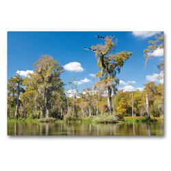 Premium Textil-Leinwand 90 x 60 cm Quer-Format Walkulla Springs | Wandbild, HD-Bild auf Keilrahmen, Fertigbild auf hochwertigem Vlies, Leinwanddruck von Klaus Feske