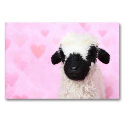 Premium Textil-Leinwand 90 x 60 cm Quer-Format Walliser Schwarznasenschaf | Wandbild, HD-Bild auf Keilrahmen, Fertigbild auf hochwertigem Vlies, Leinwanddruck von Jeanette Hutfluss