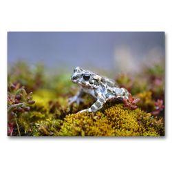 Premium Textil-Leinwand 90 x 60 cm Quer-Format Wechselkröte | Wandbild, HD-Bild auf Keilrahmen, Fertigbild auf hochwertigem Vlies, Leinwanddruck von GUGIGEI