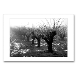 Premium Textil-Leinwand 90 x 60 cm Quer-Format Weiden | Wandbild, HD-Bild auf Keilrahmen, Fertigbild auf hochwertigem Vlies, Leinwanddruck von Martina Marten