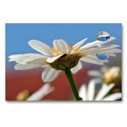 Premium Textil-Leinwand 90 x 60 cm Quer-Format Weiße Margerite mit Wassertropfen | Wandbild, HD-Bild auf Keilrahmen, Fertigbild auf hochwertigem Vlies, Leinwanddruck von Susanne Herppich
