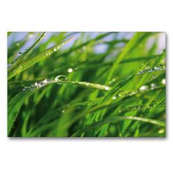 Premium Textil-Leinwand 90 x 60 cm Quer-Format Wellness Gras | Wandbild, HD-Bild auf Keilrahmen, Fertigbild auf hochwertigem Vlies, Leinwanddruck von Tanja Riedel von Riedel,  Tanja