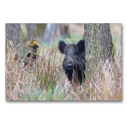 Premium Textil-Leinwand 90 x 60 cm Quer-Format Wildschwein in heimischer Natur | Wandbild, HD-Bild auf Keilrahmen, Fertigbild auf hochwertigem Vlies, Leinwanddruck von Michael Breuer