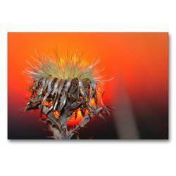 Premium Textil-Leinwand 90 x 60 cm Quer-Format wundervolle Abendstimmung | Wandbild, HD-Bild auf Keilrahmen, Fertigbild auf hochwertigem Vlies, Leinwanddruck von Michis Fotogalerie