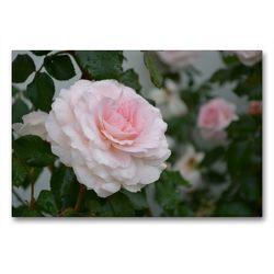Premium Textil-Leinwand 90 x 60 cm Quer-Format Zarte Schönheiten – Bezaubernde Rosenblüten | Wandbild, HD-Bild auf Keilrahmen, Fertigbild auf hochwertigem Vlies, Leinwanddruck von Bianca Schumann