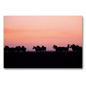 Premium Textil-Leinwand 90 x 60 cm Quer-Format Zebras in der Masai Mara | Wandbild, HD-Bild auf Keilrahmen, Fertigbild auf hochwertigem Vlies, Leinwanddruck von Michael Herzog