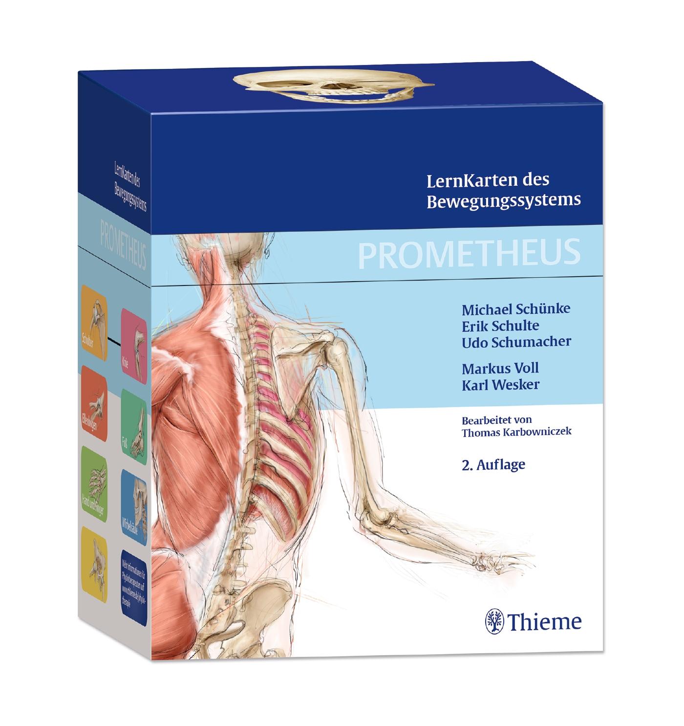Berühmt Anatomie Des Herzens Lernkarten Ideen - Anatomie Von ...