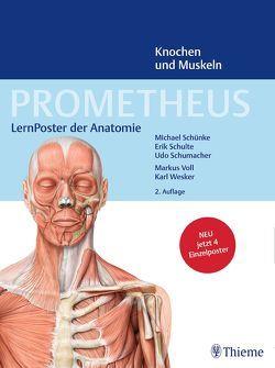PROMETHEUS LernPoster der Anatomie, Knochen und Muskeln von Schulte,  Erik, Schumacher,  Udo, Schünke,  Michael