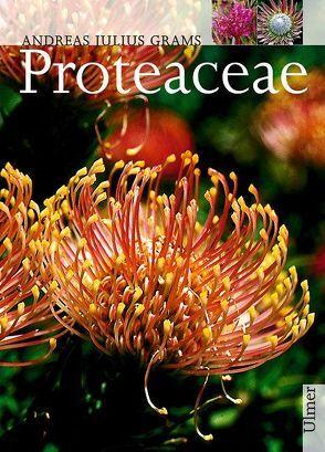 Proteaceae von Grams,  Andreas J