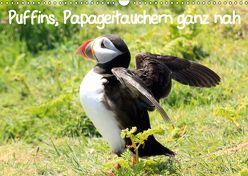 Puffins, Papageitauchern ganz nah (Wandkalender 2019 DIN A3 quer) von Valder,  Natascha