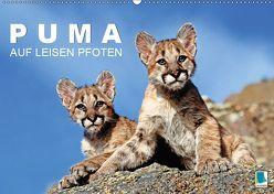 Puma: Auf leisen Pfoten (Wandkalender 2019 DIN A2 quer) von CALVENDO