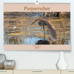 Purpurreiher (Premium, hochwertiger DIN A2 Wandkalender 2020, Kunstdruck in Hochglanz) von Köhn,  André