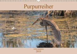 Purpurreiher (Wandkalender 2019 DIN A3 quer) von Köhn,  André