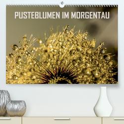 Pusteblumen im Morgentau (Premium, hochwertiger DIN A2 Wandkalender 2020, Kunstdruck in Hochglanz) von Sock,  Reinhard