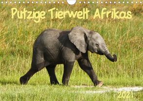 Putzige Tierwelt Afrikas (Wandkalender 2021 DIN A4 quer) von Haase,  Nadine