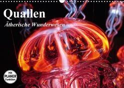 Quallen. Ätherische Wunderwesen (Wandkalender 2018 DIN A3 quer) von Stanzer,  Elisabeth