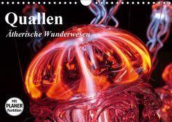 Quallen. Ätherische Wunderwesen (Wandkalender 2019 DIN A4 quer) von Stanzer,  Elisabeth