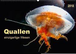 Quallen – einzigartige Wesen (Wandkalender 2018 DIN A2 quer) von Roder,  Peter