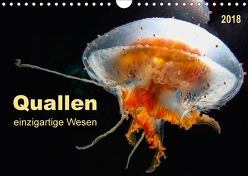 Quallen – einzigartige Wesen (Wandkalender 2018 DIN A4 quer) von Roder,  Peter