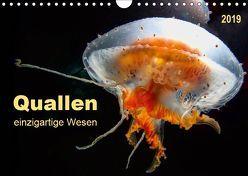 Quallen – einzigartige Wesen (Wandkalender 2019 DIN A4 quer) von Roder,  Peter