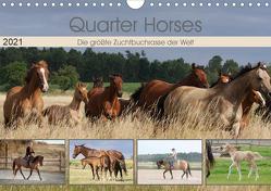 Quarter Horses – Die größte Zuchtbuchrasse der Welt (Wandkalender 2021 DIN A4 quer) von Mielewczyk,  B.