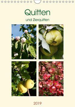 Quitten und Zierquitten (Wandkalender 2019 DIN A4 hoch) von Kruse,  Gisela