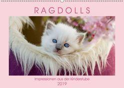 RAGDOLLS Impressionen aus der Kinderstube (Wandkalender 2019 DIN A2 quer) von Reiß-Seibert,  Marion