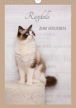 Ragdolls zum Verlieben (Wandkalender 2019 DIN A4 hoch) von Reiß-Seibert,  Marion