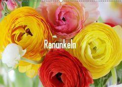 Ranunkeln (Wandkalender 2019 DIN A2 quer) von Kruse,  Gisela
