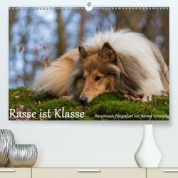 Rasse ist Klasse (Premium, hochwertiger DIN A2 Wandkalender 2020, Kunstdruck in Hochglanz) von Schmäing,  Werner