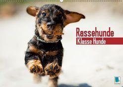 Rassehunde: Klasse Hunde (Wandkalender 2019 DIN A2 quer) von CALVENDO