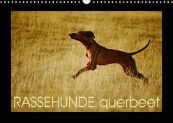RASSEHUNDE querbeet (Wandkalender 2019 DIN A3 quer) von Köntopp,  Kathrin