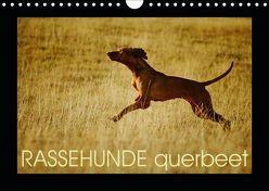 RASSEHUNDE querbeet (Wandkalender 2019 DIN A4 quer) von Köntopp,  Kathrin