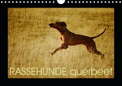 RASSEHUNDE querbeet (Wandkalender 2021 DIN A4 quer) von Köntopp,  Kathrin