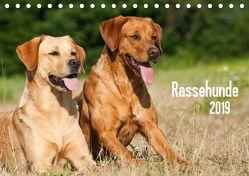 Rassehunde (Tischkalender 2019 DIN A5 quer) von Dzierzawa,  Judith