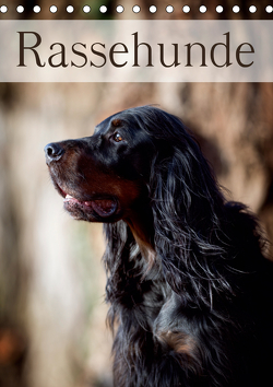 Rassehunde (Tischkalender 2021 DIN A5 hoch) von Noack,  Nicole