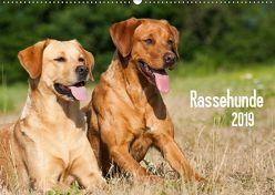 Rassehunde (Wandkalender 2019 DIN A2 quer) von Dzierzawa,  Judith