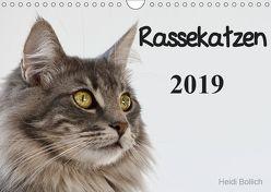 Rassekatzen 2019 (Wandkalender 2019 DIN A4 quer) von Bollich,  Heidi